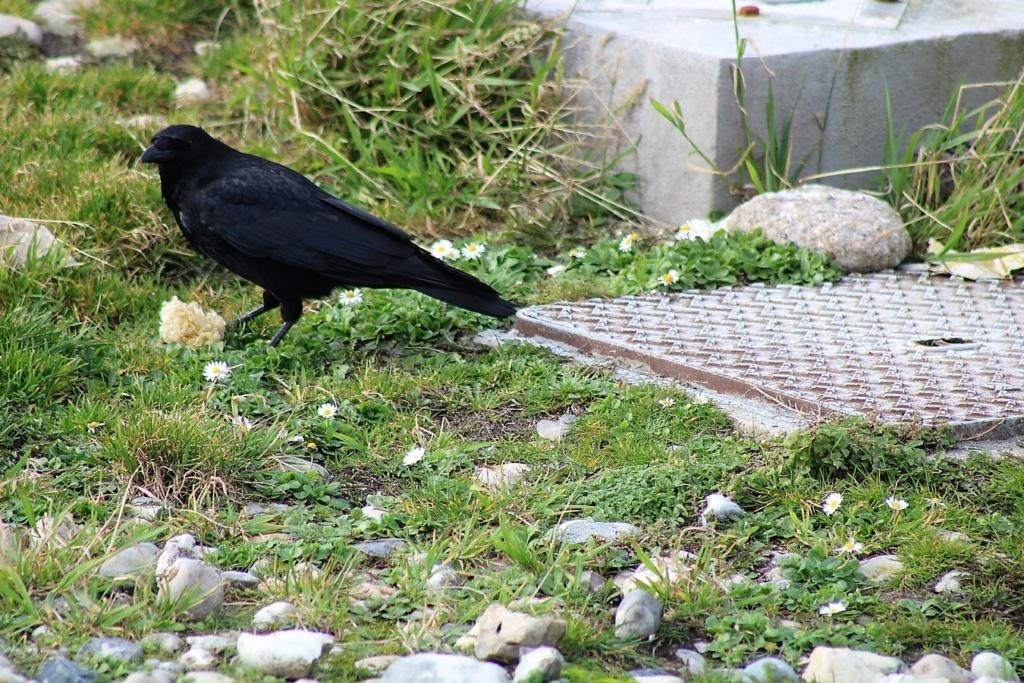[Ouvert] FIL - Oiseaux. Img_5546