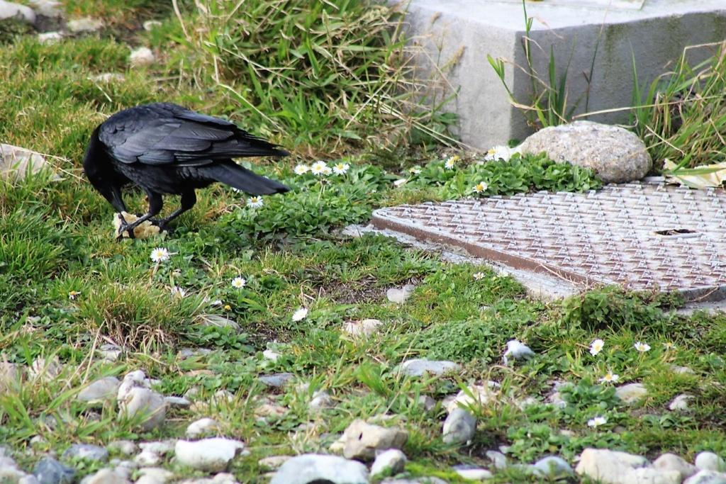 [Ouvert] FIL - Oiseaux. Img_5547
