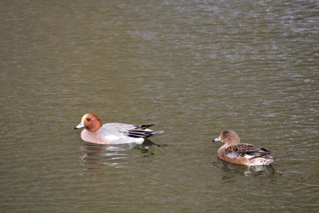 [Ouvert] FIL - Oiseaux. Img_5642