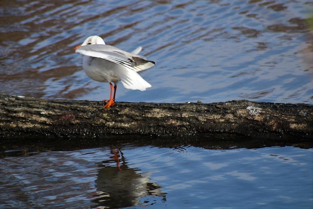 [Ouvert] FIL - Oiseaux. Img_5643