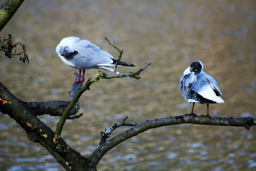 [Ouvert] FIL - Oiseaux. Img_5644