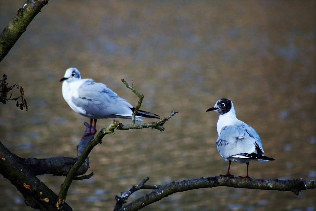 [Ouvert] FIL - Oiseaux. Img_5645