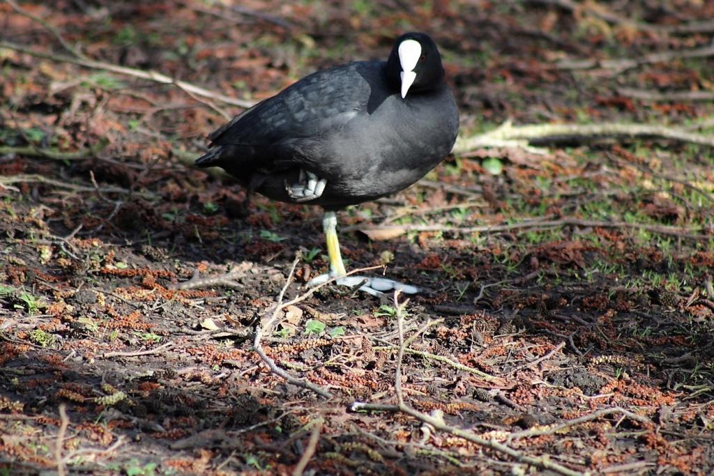 [Ouvert] FIL - Oiseaux. Img_5646