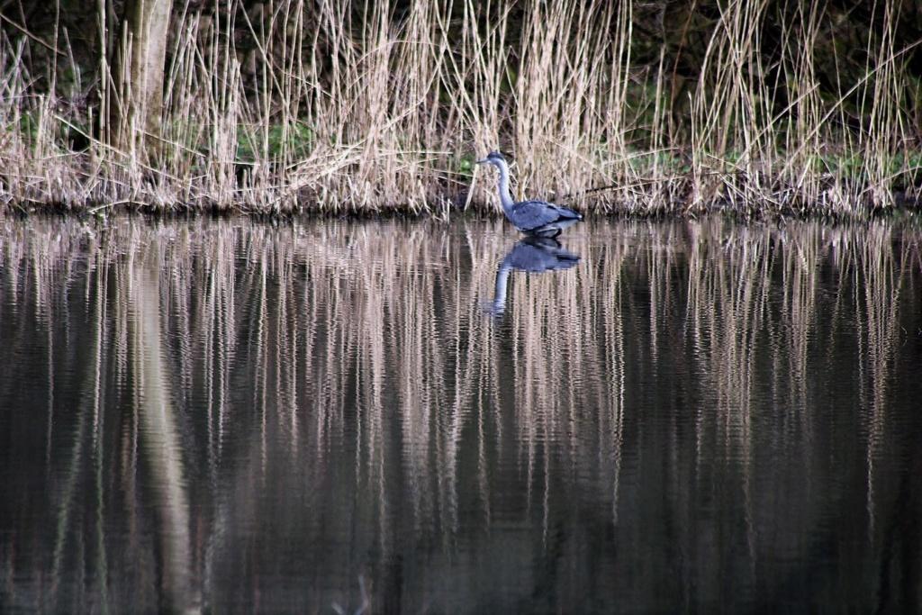[Ouvert] FIL - Oiseaux. Img_5649