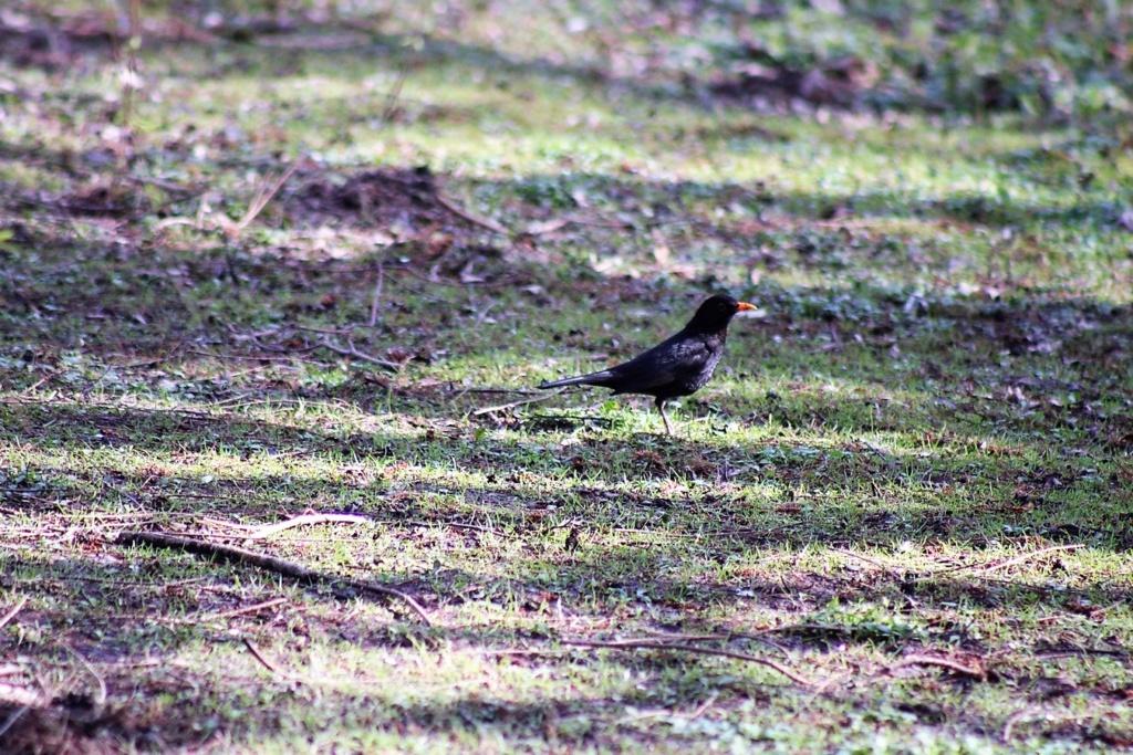 [Ouvert] FIL - Oiseaux. Img_5650
