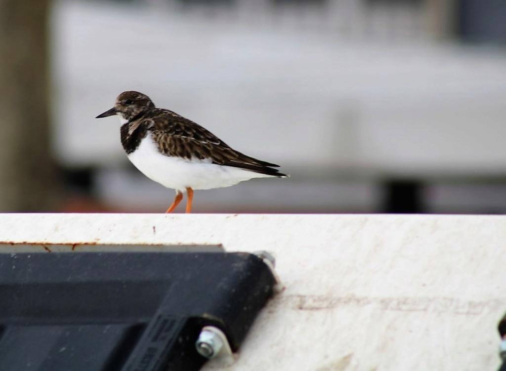 [Ouvert] FIL - Oiseaux. Img_5658
