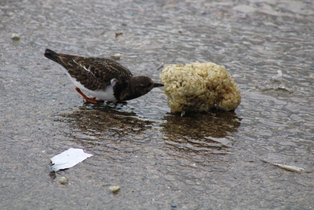 [Ouvert] FIL - Oiseaux. Img_5660