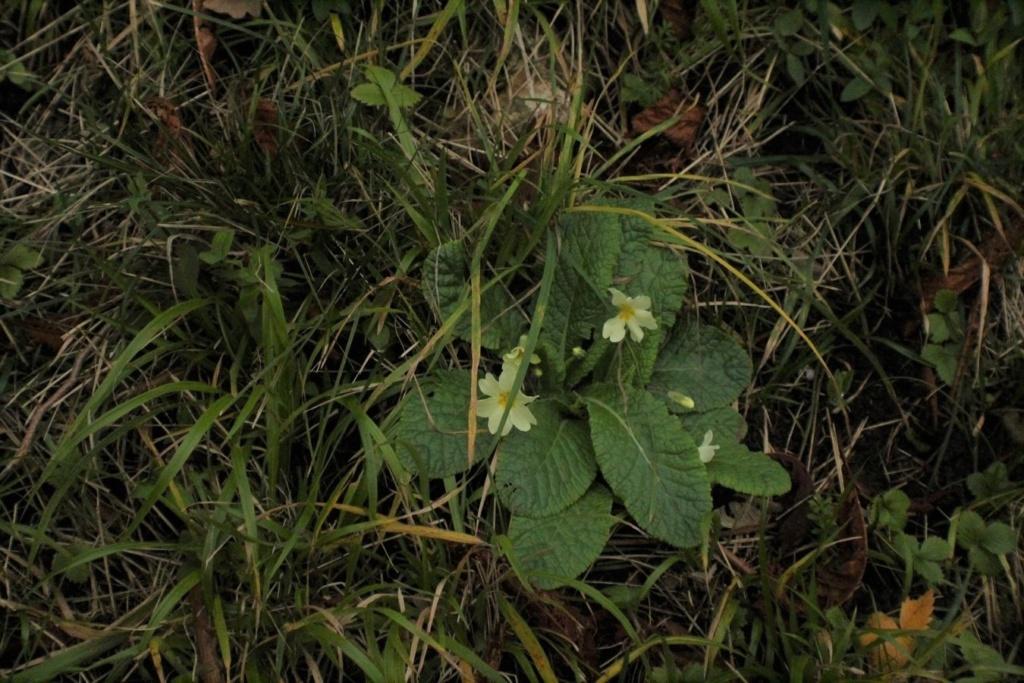 [Fil ouvert] Fleurs et plantes - Page 10 Img_5711