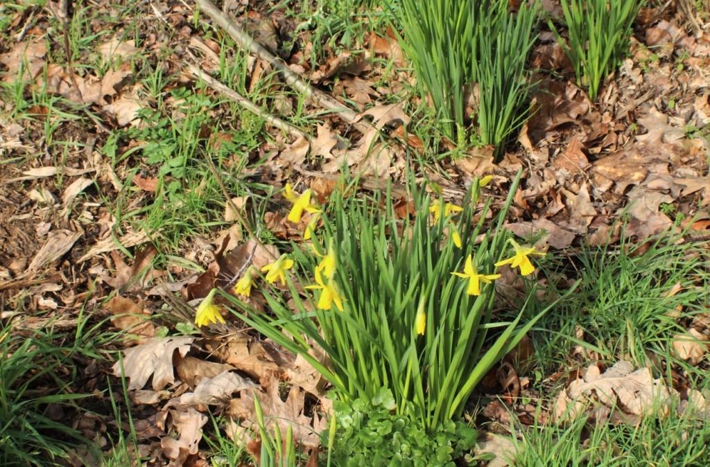 [Fil ouvert] Fleurs et plantes - Page 10 Img_5725