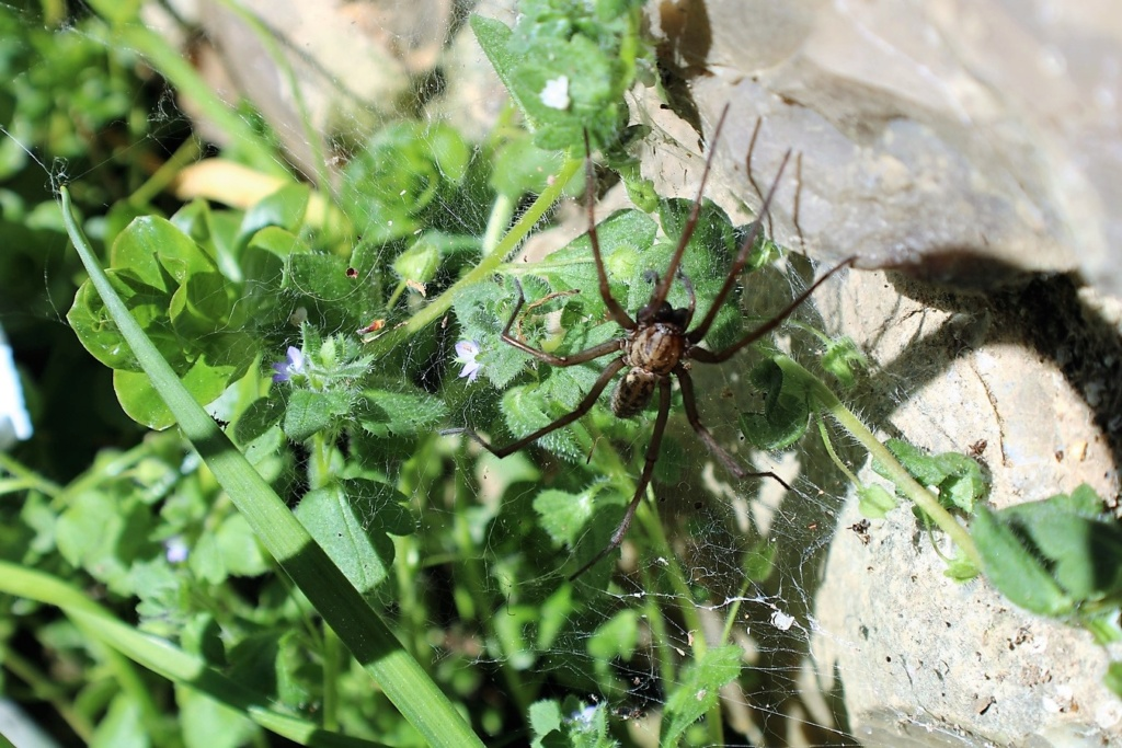 (FIL OUVERT à tous) vous aimez les araignées? - Page 7 Img_5944