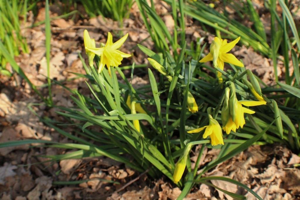 [Fil ouvert] Fleurs et plantes - Page 10 Img_6018