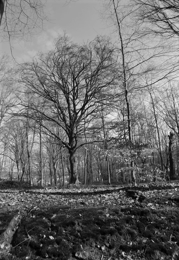 [fil ouvert] la forêt dans tous ses états - Page 24 Img_6029