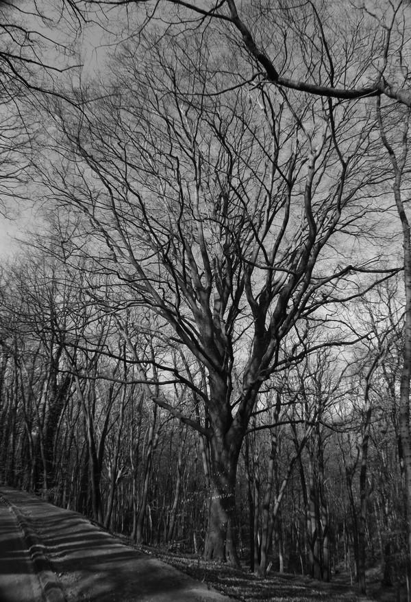[fil ouvert] la forêt dans tous ses états - Page 24 Img_6030