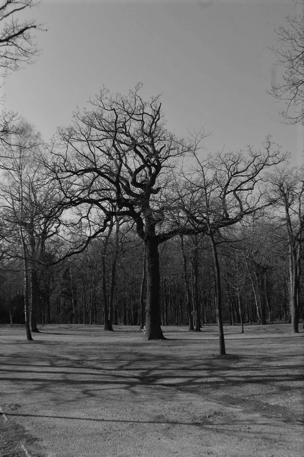 [fil ouvert] la forêt dans tous ses états - Page 24 Img_6031