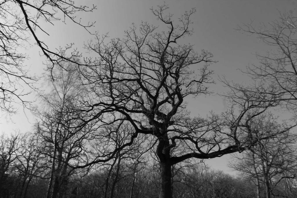 [fil ouvert] la forêt dans tous ses états - Page 24 Img_6032
