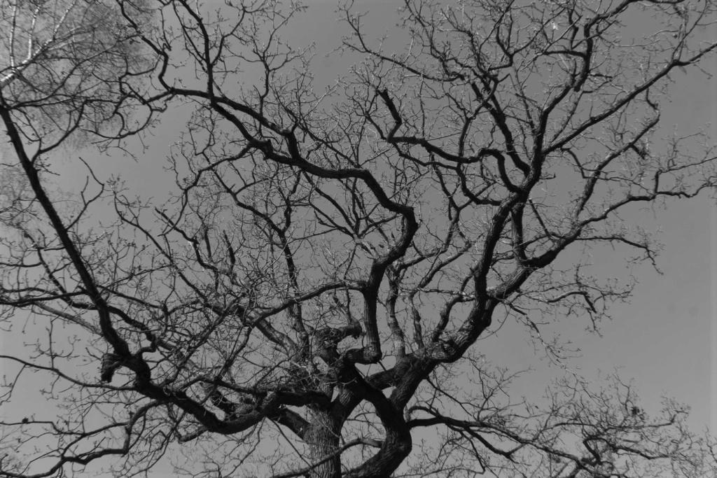 [fil ouvert] la forêt dans tous ses états - Page 24 Img_6035