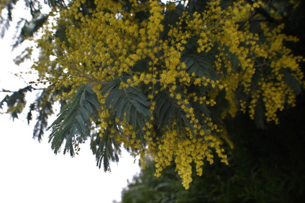 [Fil ouvert] Fleurs et plantes - Page 10 Img_6037