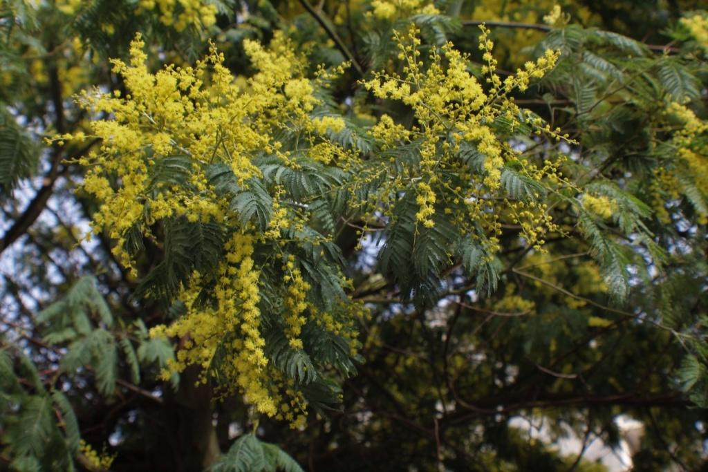 [Fil ouvert] Fleurs et plantes - Page 10 Img_6039