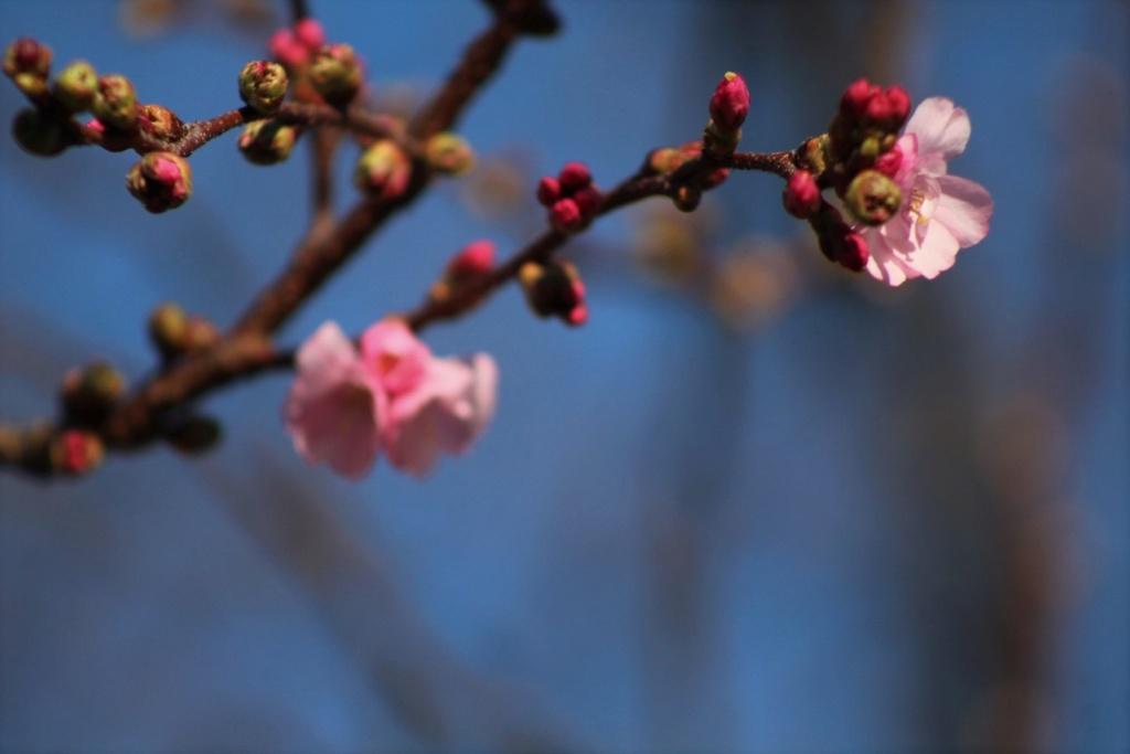 [Fil ouvert] Fleurs et plantes - Page 10 Img_6128