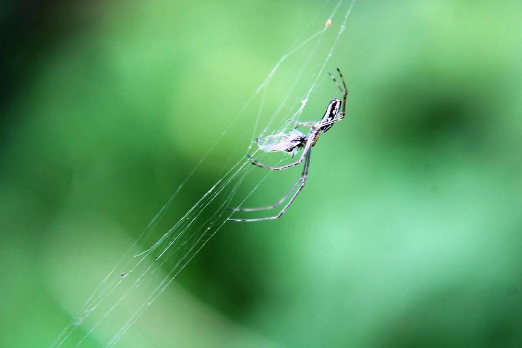 (FIL OUVERT à tous) vous aimez les araignées? - Page 7 Img_6140