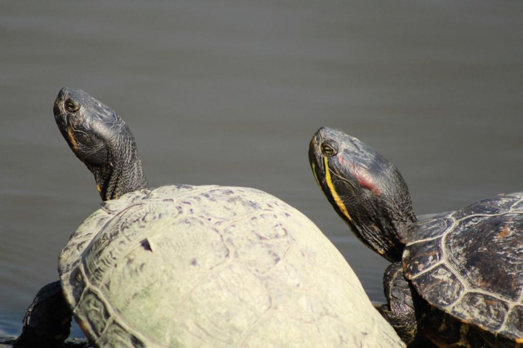 [Fil ouvert à tous] Reptiles, serpents, tortues, amphibiens, ... - Page 10 Img_6817