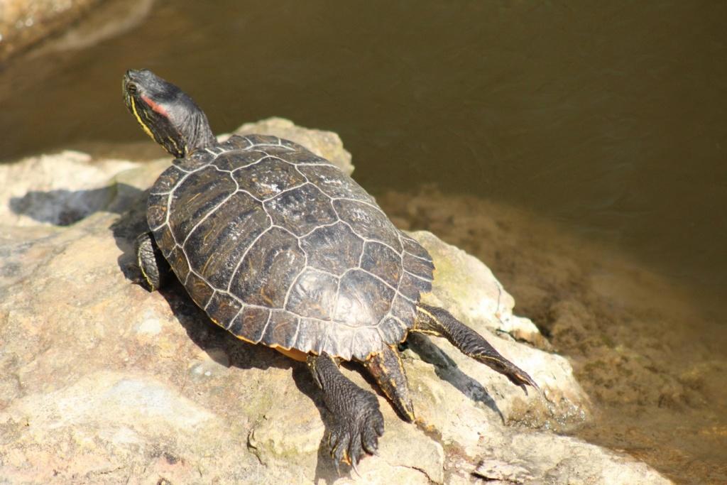 [Fil ouvert à tous] Reptiles, serpents, tortues, amphibiens, ... - Page 10 Img_6818