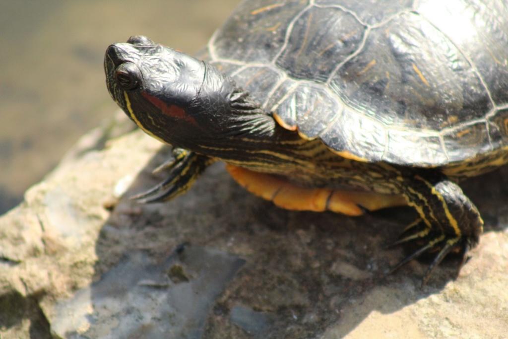 [Fil ouvert à tous] Reptiles, serpents, tortues, amphibiens, ... - Page 10 Img_6819