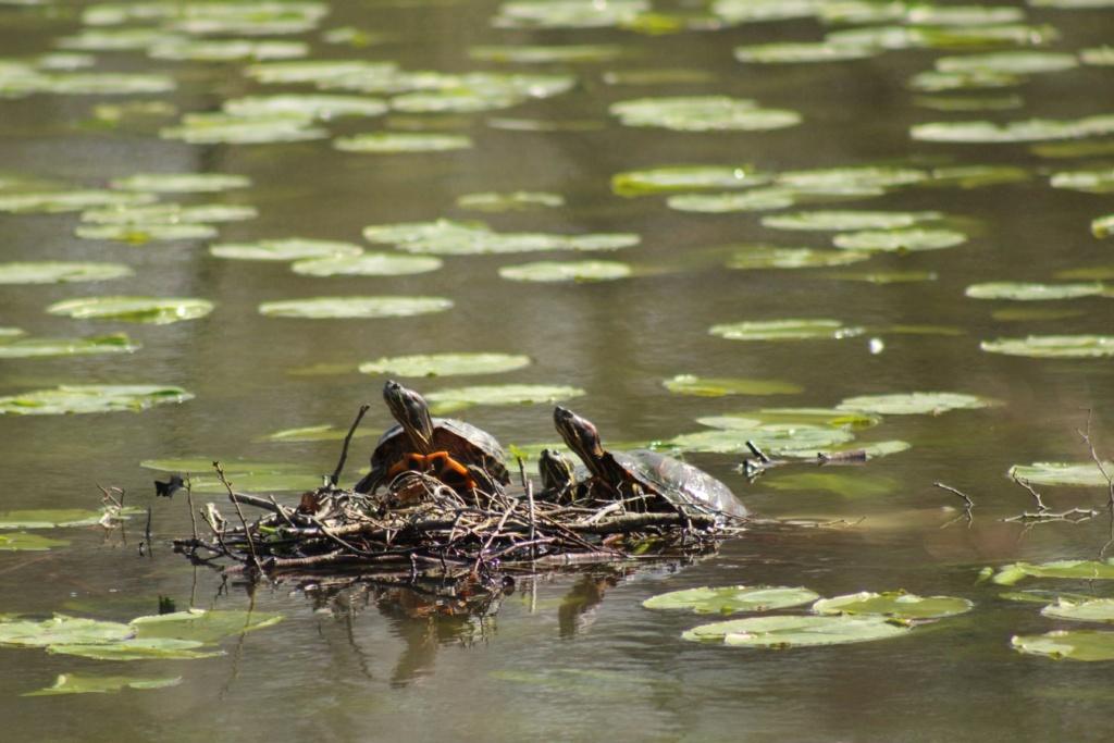 [Fil ouvert à tous] Reptiles, serpents, tortues, amphibiens, ... - Page 10 Img_6820