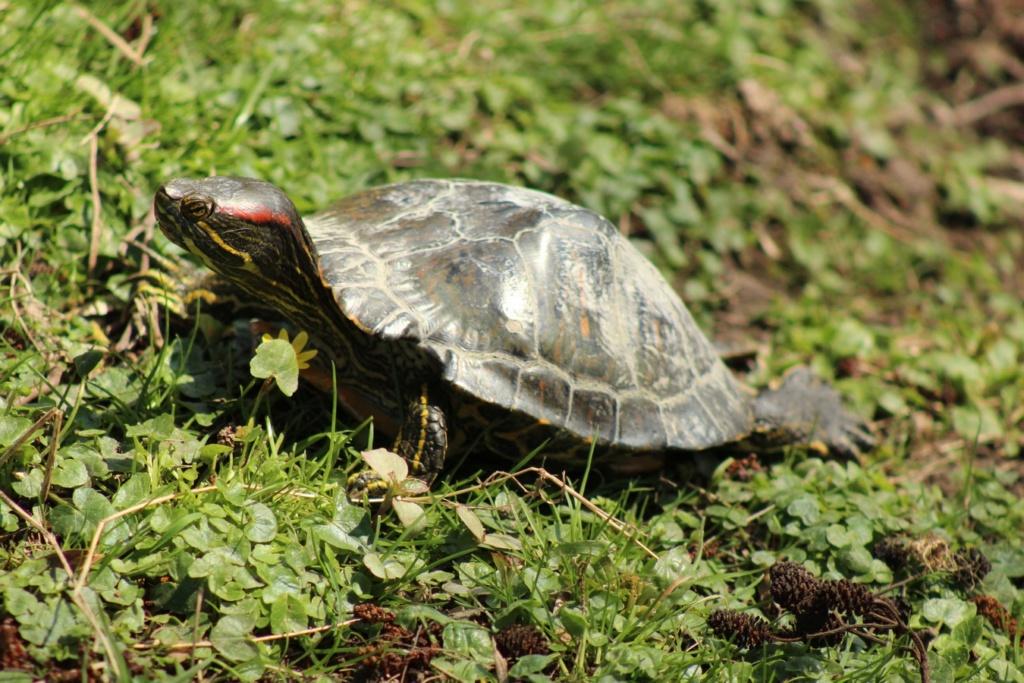 [Fil ouvert à tous] Reptiles, serpents, tortues, amphibiens, ... - Page 10 Img_6821