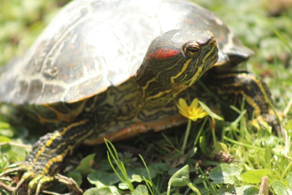 [Fil ouvert à tous] Reptiles, serpents, tortues, amphibiens, ... - Page 10 Img_6822