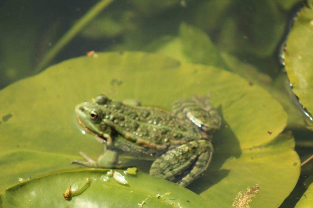 [Fil ouvert à tous] Reptiles, serpents, tortues, amphibiens, ... - Page 10 Img_7625