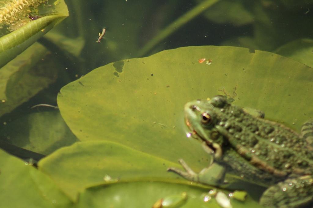 [Fil ouvert à tous] Reptiles, serpents, tortues, amphibiens, ... - Page 10 Img_7626