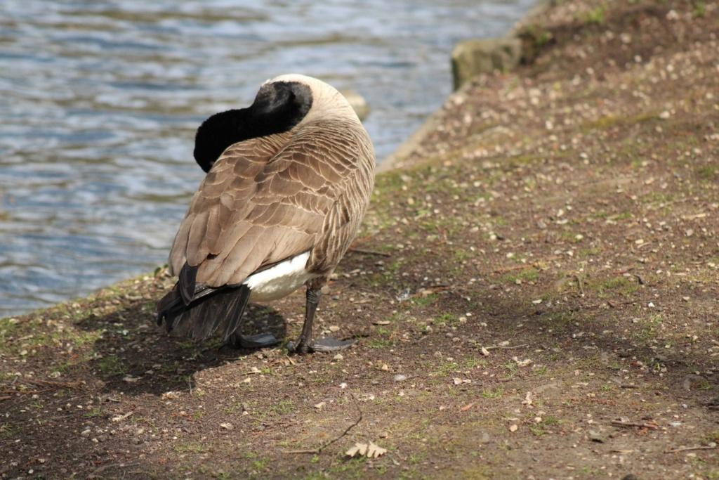 [Ouvert] FIL - Oiseaux. - Page 28 Img_7627