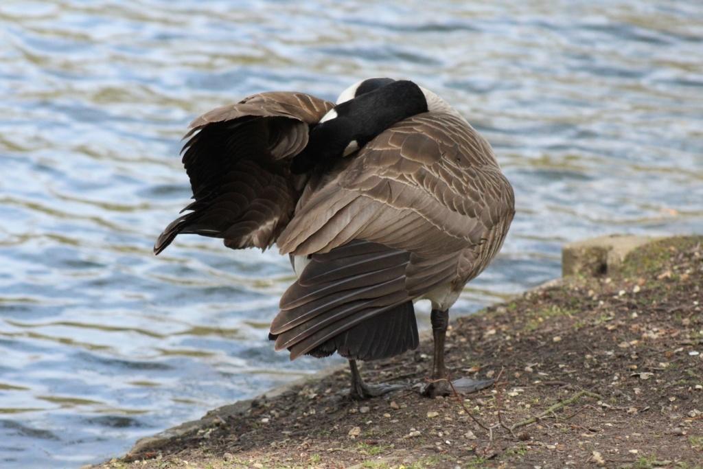 [Ouvert] FIL - Oiseaux. - Page 28 Img_7628