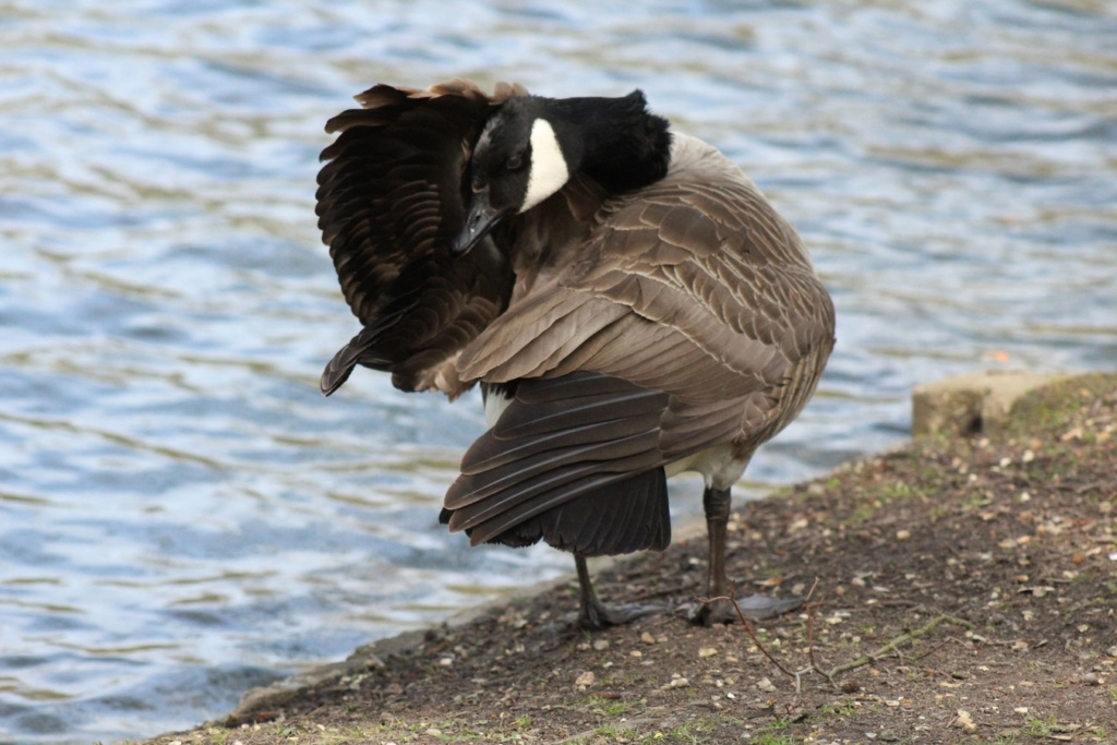 [Ouvert] FIL - Oiseaux. - Page 28 Img_7629