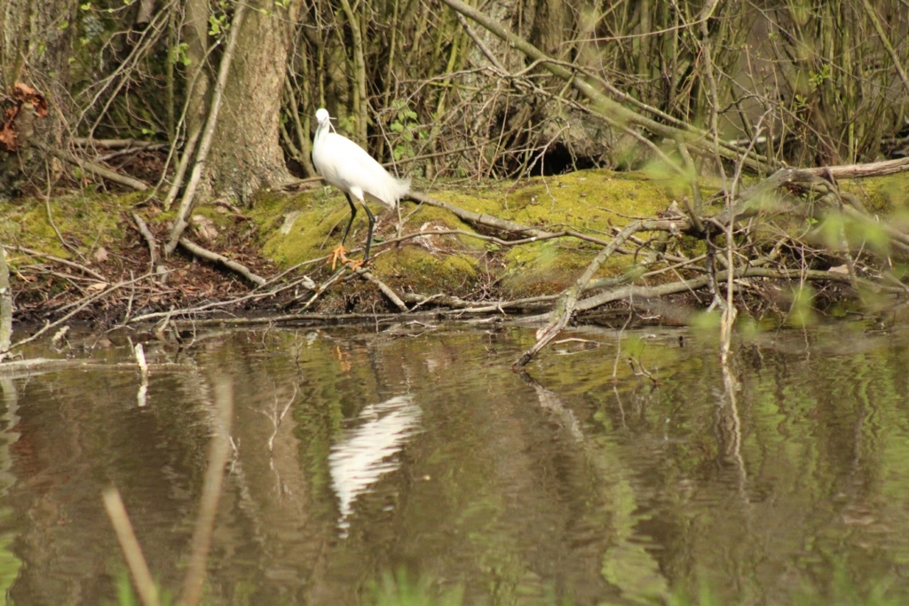 [Ouvert] FIL - Oiseaux. - Page 28 Img_7711