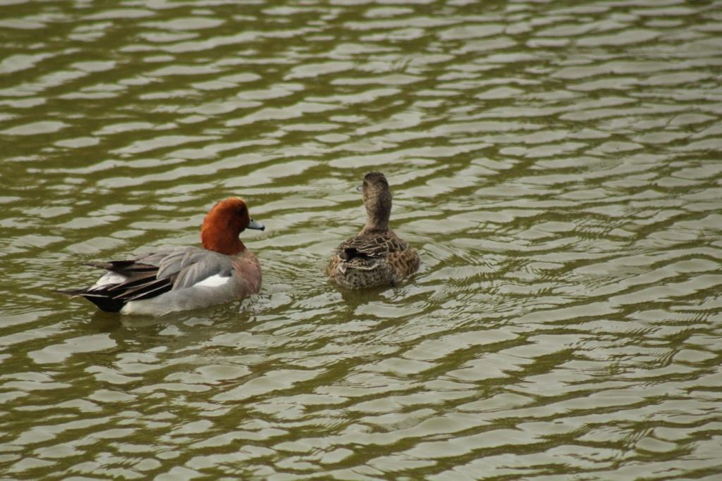 [Ouvert] FIL - Oiseaux. - Page 28 Img_7713