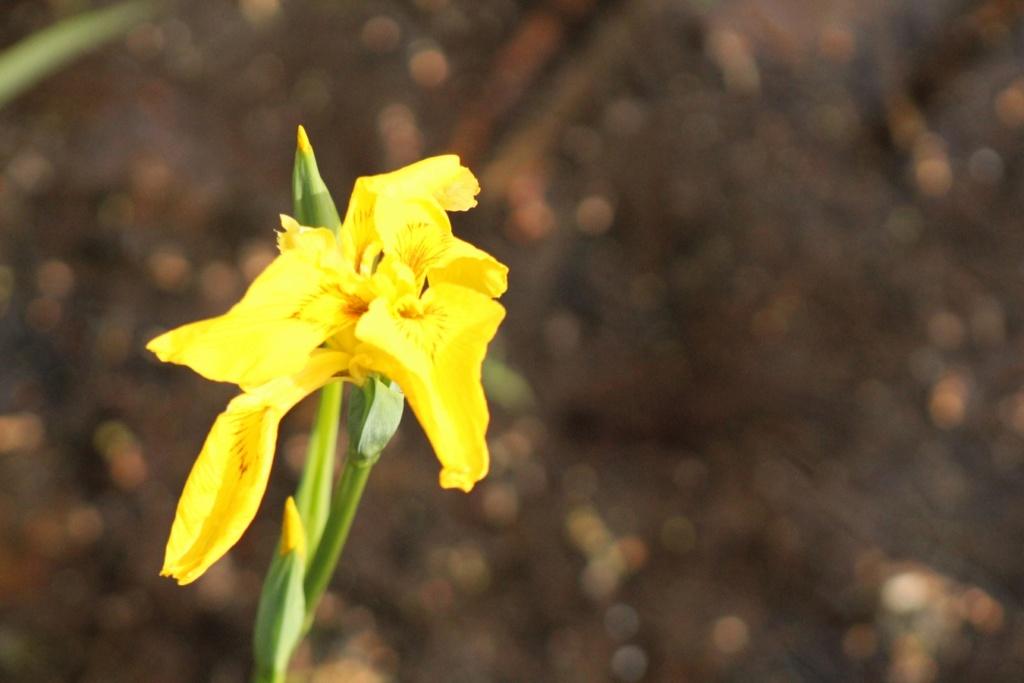 [Fil ouvert] Fleurs et plantes - Page 13 Img_7716