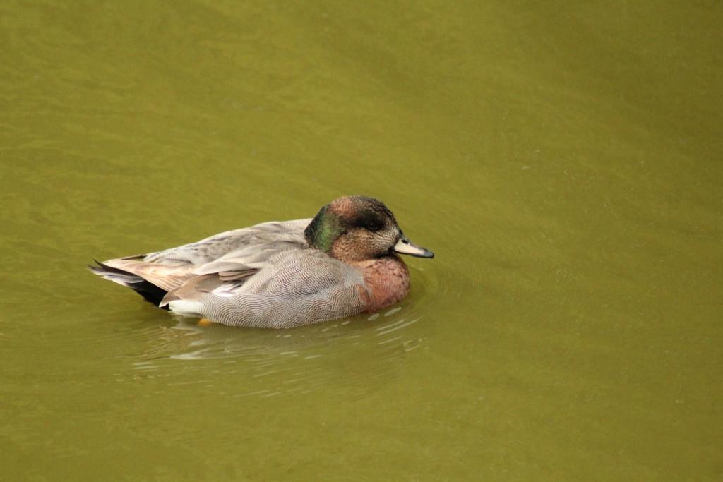 [Ouvert] FIL - Oiseaux. - Page 28 Img_7717