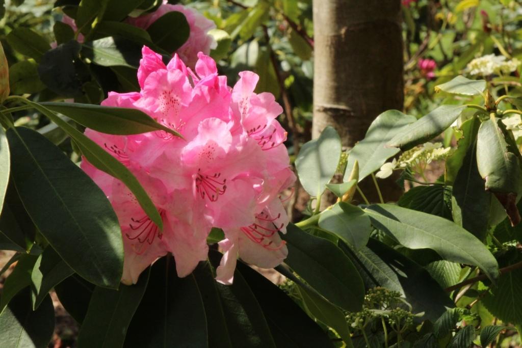 [Fil ouvert] Fleurs et plantes - Page 14 Img_8211