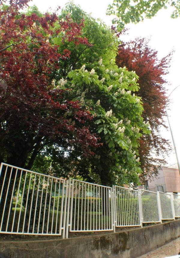[Fil ouvert] Fleurs et plantes - Page 15 Img_8214