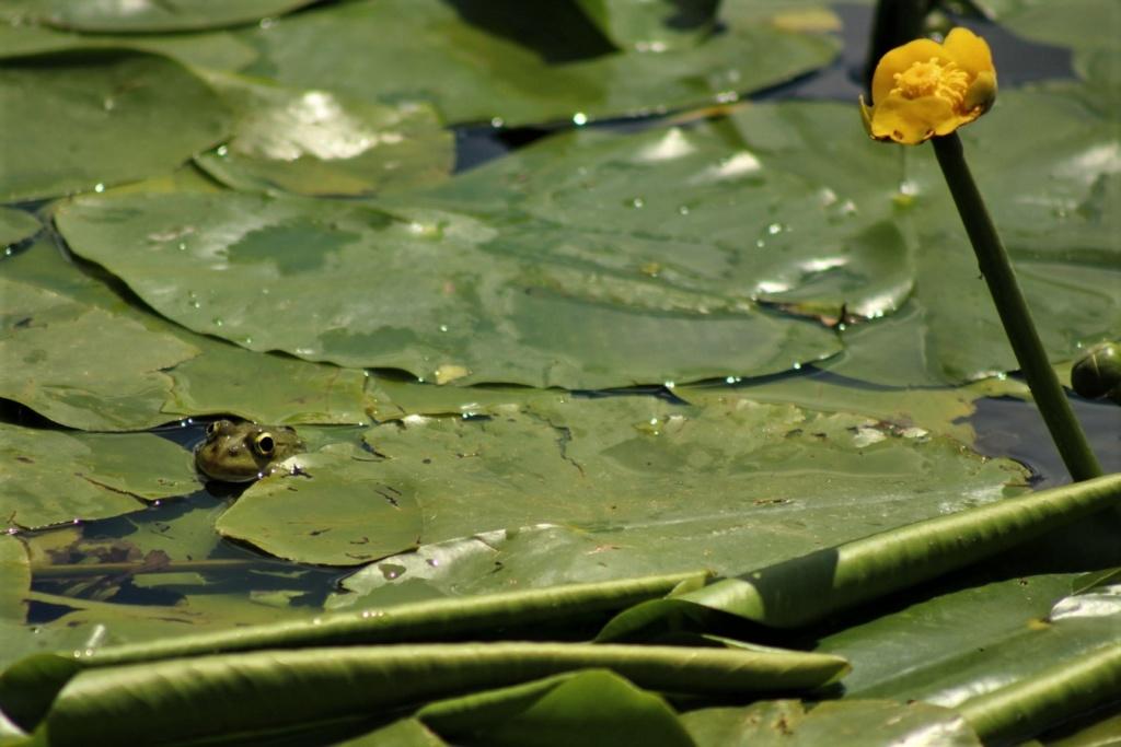[Fil ouvert à tous] Reptiles, serpents, tortues, amphibiens, ... - Page 10 Img_8644