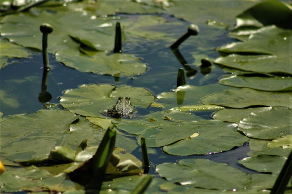 [Fil ouvert à tous] Reptiles, serpents, tortues, amphibiens, ... - Page 10 Img_8645