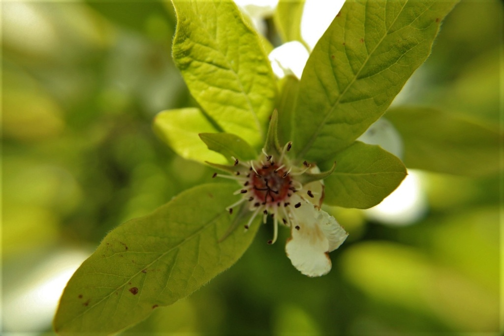 [Fil ouvert] Fleurs et plantes - Page 15 Img_8725