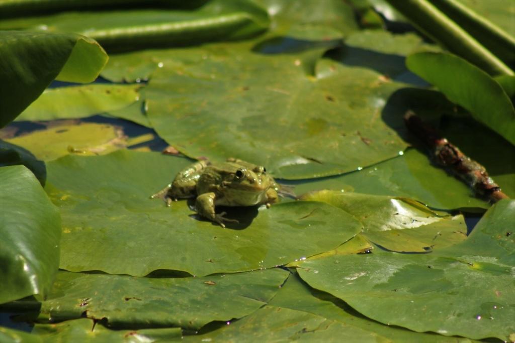[Fil ouvert à tous] Reptiles, serpents, tortues, amphibiens, ... - Page 10 Img_8810