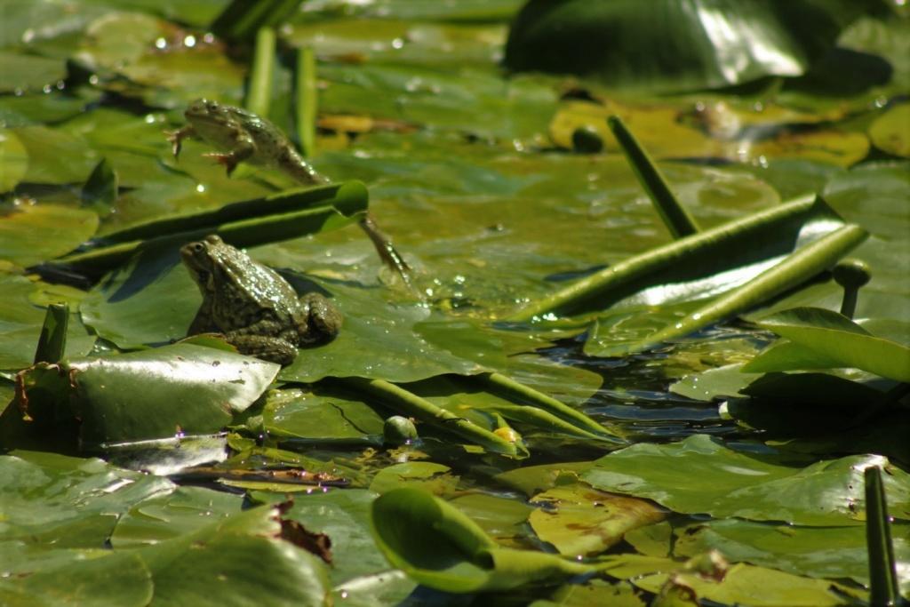 [Fil ouvert à tous] Reptiles, serpents, tortues, amphibiens, ... - Page 10 Img_8811