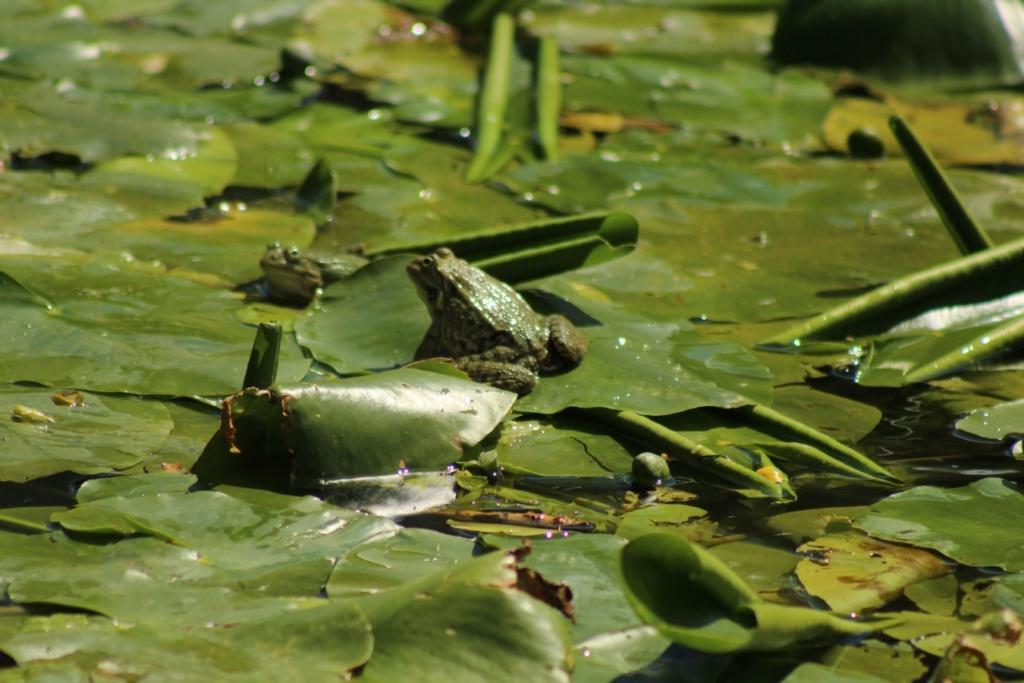 [Fil ouvert à tous] Reptiles, serpents, tortues, amphibiens, ... - Page 10 Img_8812