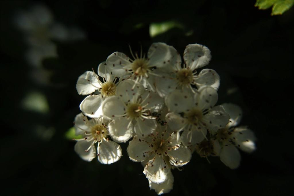 [Fil ouvert] Fleurs et plantes - Page 15 Img_8813
