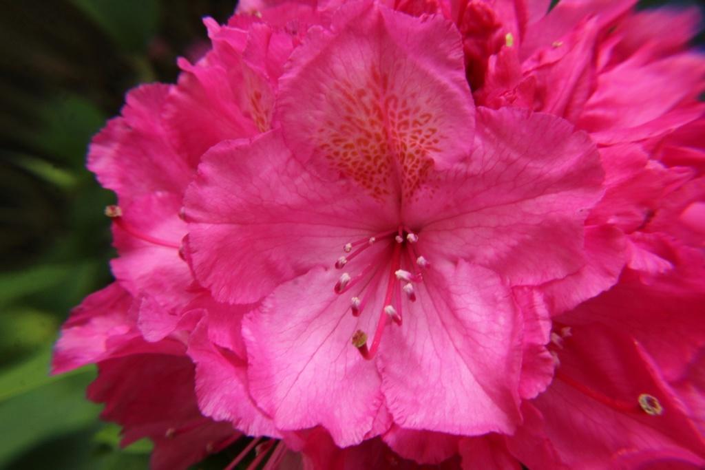 [Fil ouvert] Fleurs et plantes - Page 15 Img_8912