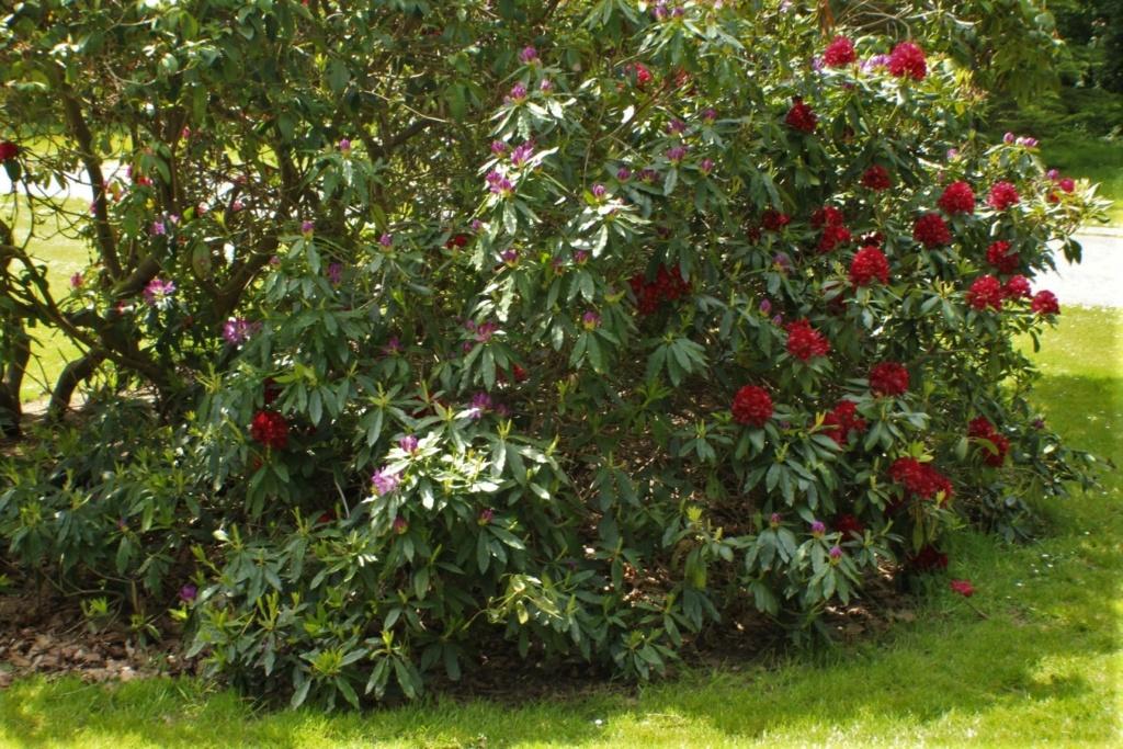 [Fil ouvert] Fleurs et plantes - Page 15 Img_8913